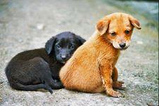 Бихте ли прибрали животно от улицата?