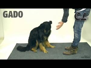 Как кучетата реагират на фокуси