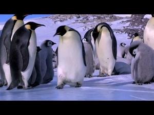 Пингвини в издънка