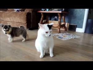 Две кученца и една много търпелива котка!