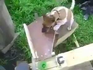 Ето какво става когато инженер си има куче