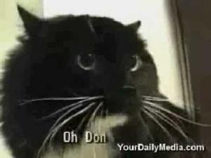 Котки говорят със стопаните си!