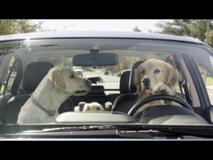 Реалистична реклама с кучета