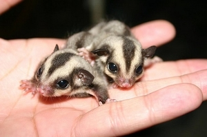 Най-сладките животни, за които никога не сте чували!