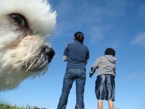 Забавни фотобомби с животни!