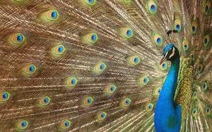Интересни факти от животинския свят