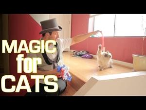 Какво мислят котките за магията..