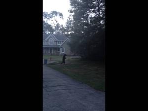 Да видиш как мечка се разхожда до къщата ти..