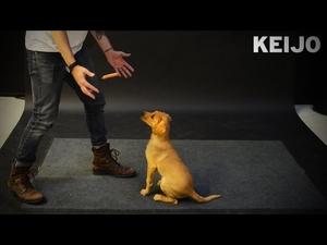 Как реагират кучетата на левитираща наденица