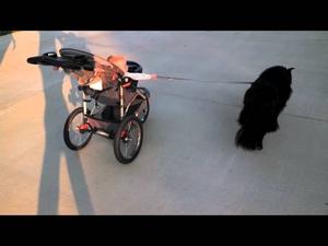 Бебе и куче се разхождат