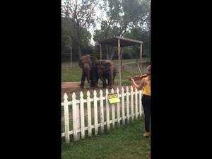 Две слончета танцуват! Сладурско!