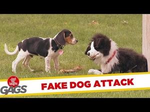 Куче vs Плюшено куче