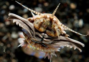 Най-страховитите водни същества..