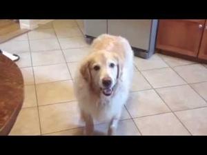 Как изглеждат кучетата след посещение при ветеринаря...