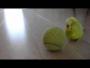 Ето това е талантлив папагал!