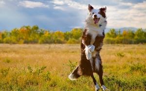Тайни на щастието, които можете да научите от кучетата...