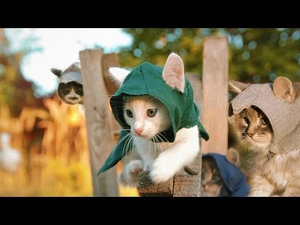 Котешки трейлър на