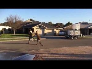В Австралия можеш да видиш всичко на улицата...