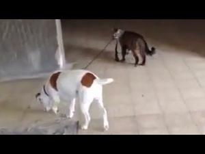 Когато котка разхожда куче...