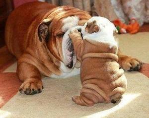 Тате, наспа ли се?