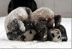 Панда фитнес