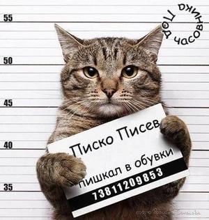 Котка престъпник