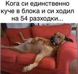 Когато си единствено куче
