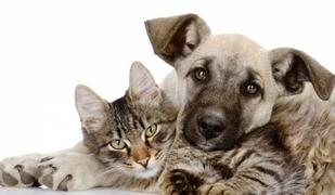 Три храни, които може да са смъртоносни за кучетата и котките
